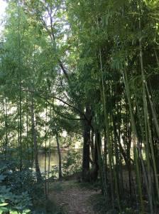 gite-les-asphodeles-riviere-plage-bambou