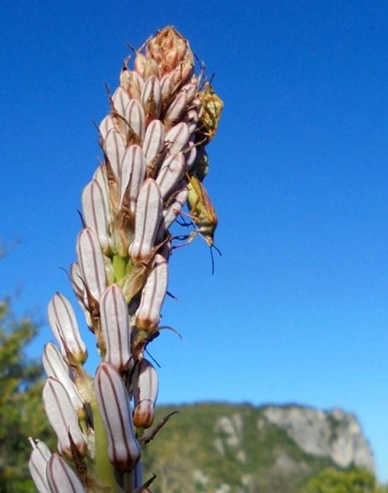 Biodiversity at the Lodge Les Asphodèles
